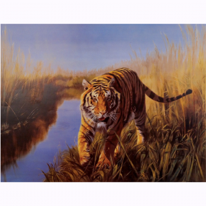 Tiger in the Indian Sunderbans