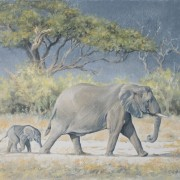 Baby Following Mother Elephant